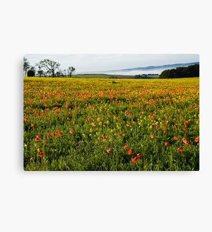 Early Morning mist on Fontmell Down Reserve, Poppy Field Canvas Print