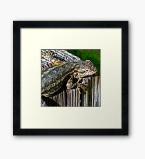 Texture of Nature; Color of Scales Framed Print