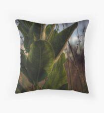 Backlit Milkweed Throw Pillow