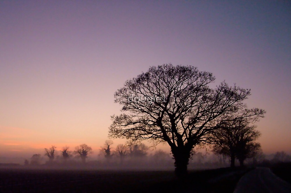 trees at christmas by dougie1