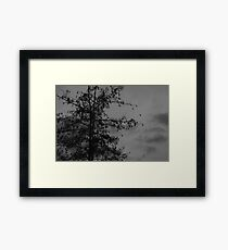 Shadow of nature Framed Print