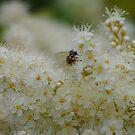 Bee's busy days by Bluesrose