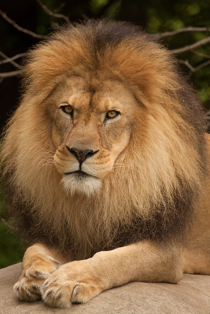 King of the Jungle by Rick Montgomery