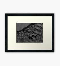 Cedric III Framed Print