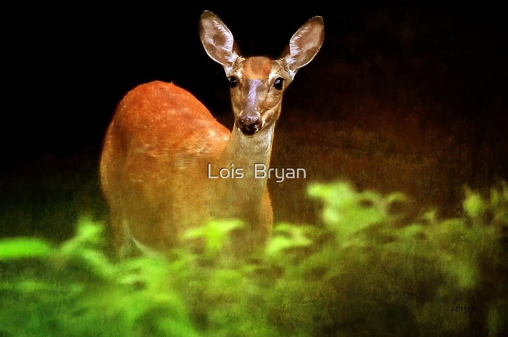 Doe Eyes by Lois  Bryan