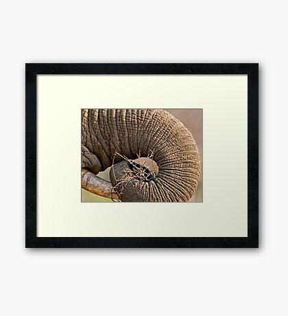 Elephant Pattern Framed Print