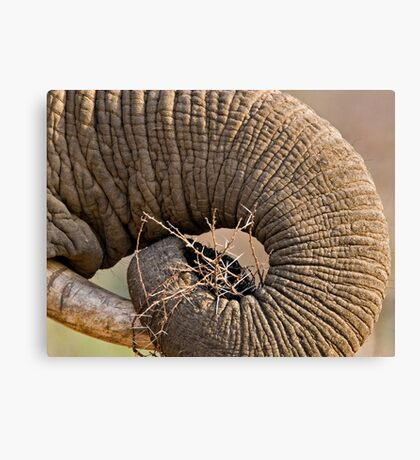 Elephant Pattern Canvas Print