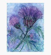The Thistle Photographic Print