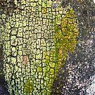 tree texture by Lynne Prestebak