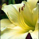 Lily #6 by Mattie Bryant