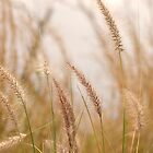 Simply Grass © Vicki Ferrari Photography by Vicki Ferrari