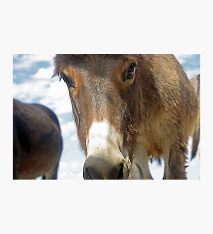 The Little Burro Says, 'Here's Looking at You Kid' Photographic Print
