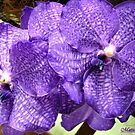 Twin Orchids by Mattie Bryant