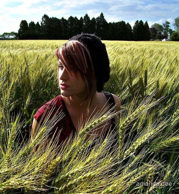 in the wheat field.  by amanda dee