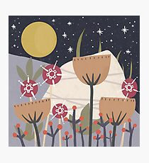 Star Field Meadow Floral Illustration Photographic Print
