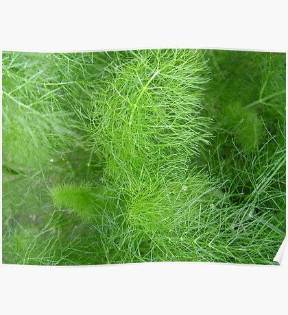 green fuzz (Komachi) Poster