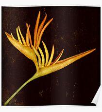 Botanica - Heliconia Psittacorum (Parakeet flower) Poster