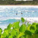 Beach Greenery by Riggs