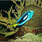 Underwater world 3 by Janone