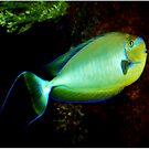 Underwater world 4 by Janone
