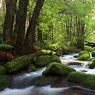 Search at koala creek by Donovan Wilson