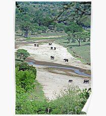 Elephant Heaven. Tarangire River, Tanzania Poster