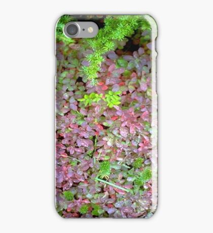 Carpeted Floor iPhone Case/Skin