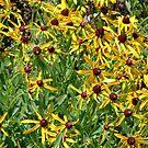 Flowers In The Wild No.1 by AlbertStewart