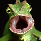 chameleon being angry by Scott Thompson