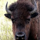 FATHER BISON by Larry Trupp
