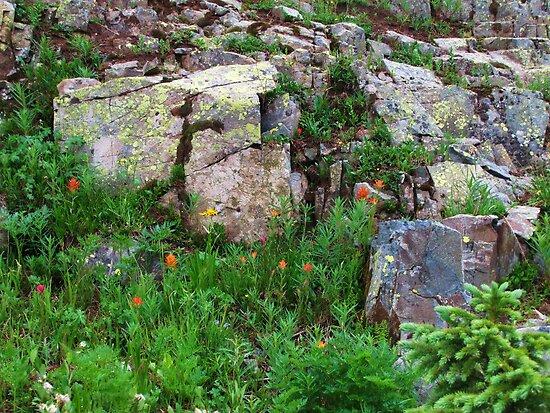Yankee Boy Basin Wildflowers by Bill Hendricks