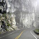 Canyon of fog by Misty Adams