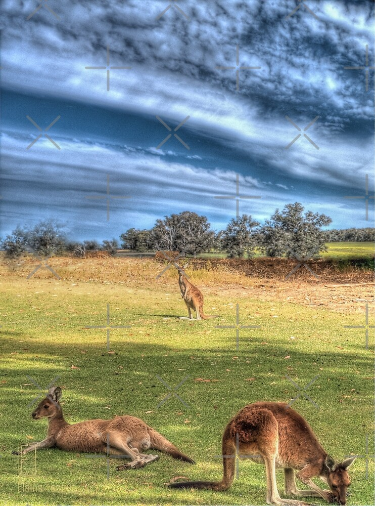 Kangaroos #2 by Elaine Teague