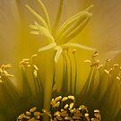 Cactus super macro (2) by Linda Sparks