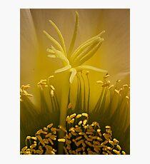 Cactus super macro (2) Photographic Print