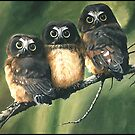 Saw Whet Owls by ferinefire