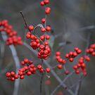 berries by MIbitoflife