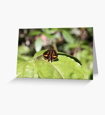 large Skipper Greeting Card