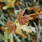 autumn leaves by MIbitoflife