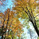 autumn trees by MIbitoflife