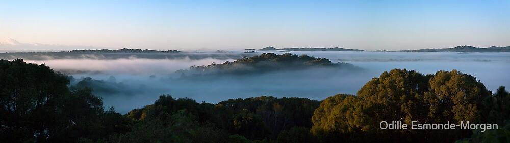 Morning Mist panorama, Terranora NSW, 13 July 2010 by Odille Esmonde-Morgan