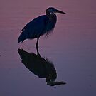 Heron, Reflected by LeeAnne Emrick