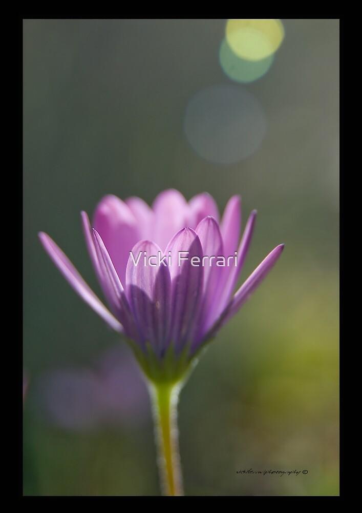 Morning Glory © Vicki Ferrari Photography by Vicki Ferrari