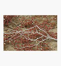 Cabrillo National Park, California Photographic Print