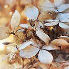 translucent leaves by MIbitoflife