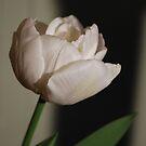 Dreamy Tulip by Lozzar Flowers & Art