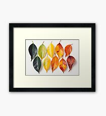 Colorful life in the nature Framed Print