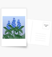 Watercolor Blue Bonnet Postcards