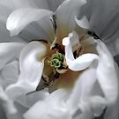 Bridal Song by Lozzar Flowers & Art