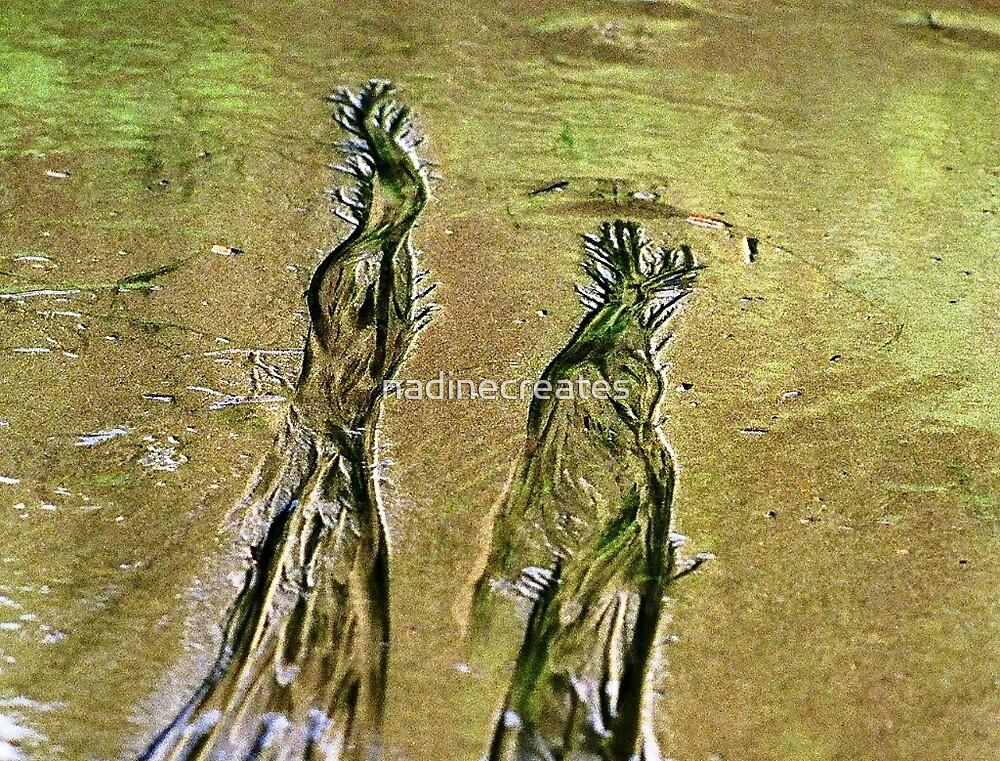Waterside Beauties by nadinecreates